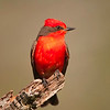 Birds of North America : 2 galleries with 69 photos