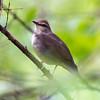 Green River Birds-197