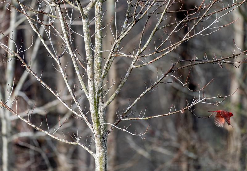 Lake Conestee Birds