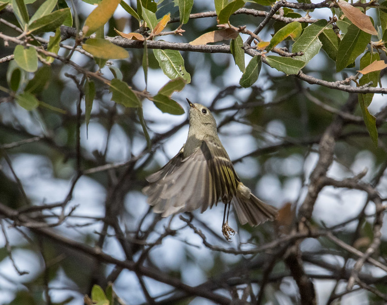 bird tucson day 1-304