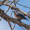 bird tucson day 1-377