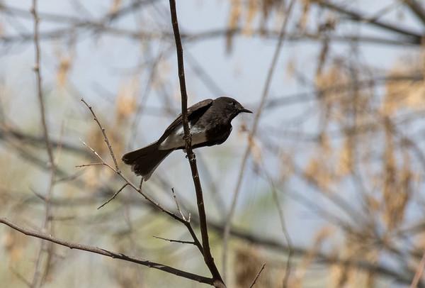 bird tucson day 1-360