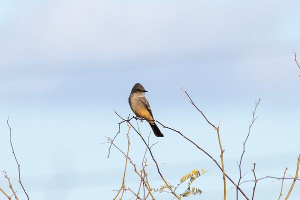 bird tucson day 1-102