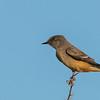 bird tucson day 1-81