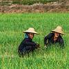 Birmanie_50
