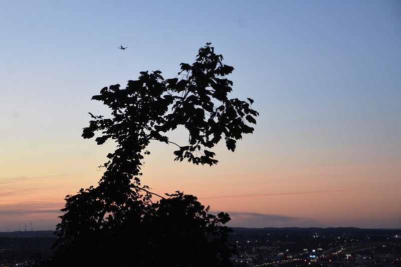 Yes that is a plane just above this tree top.  It looks like a Southwest flight about to make it's final approach.