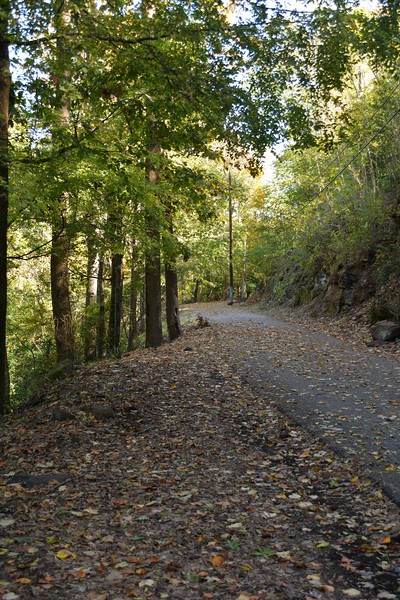 This is the trail up at Vulcan that you can walk all the way to Greensprings Highway.