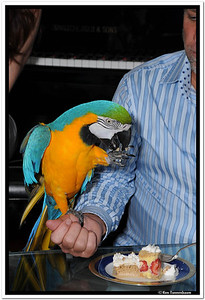 Did you know that Macaw's enjoy tres leches cake?