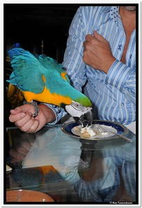 He gets more desert.  Silly bird cake is for kids.