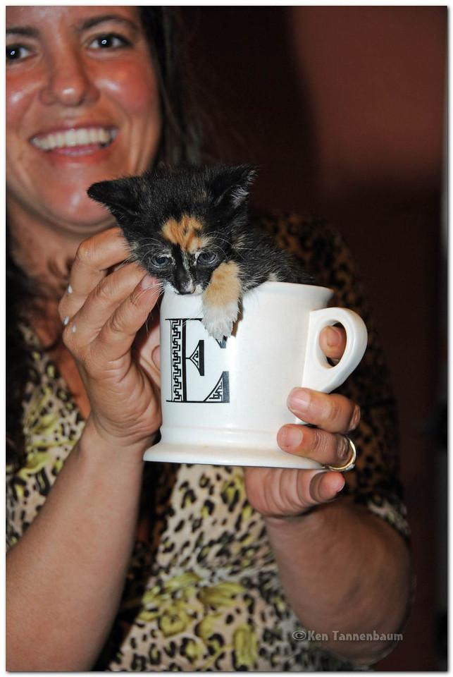 New Ramen flavor: Cup O Kitten