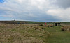 Cornish moorland setting