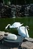 Swans-4659