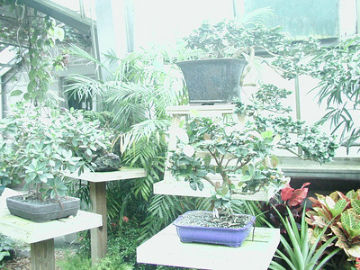 More plants.