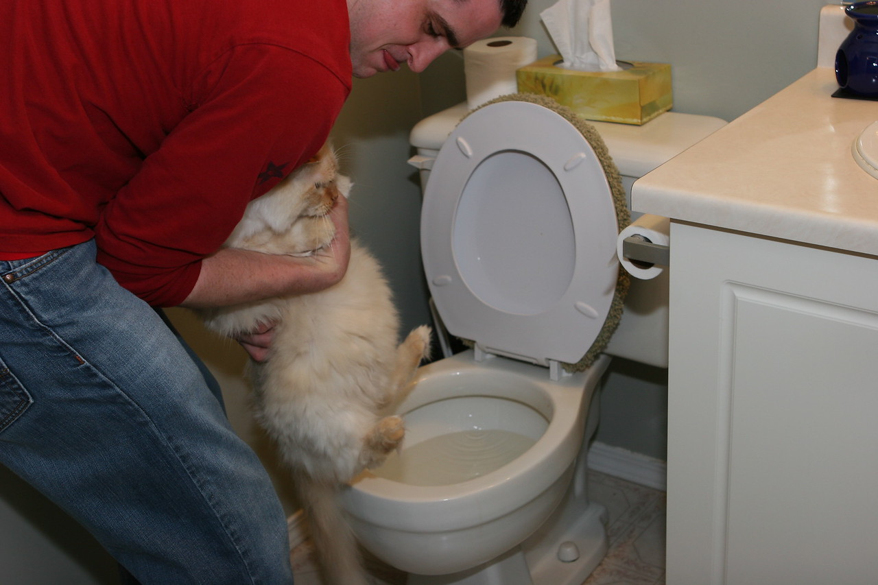 Jason tries to flush the cat down the toilet. The jokes on him, she won't fit. Even if she does, he'll be the one to fish her out.