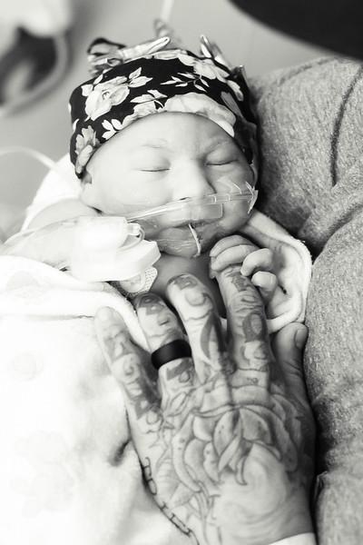Baby Harlow
