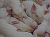 Odds Farm Jan 2014 015