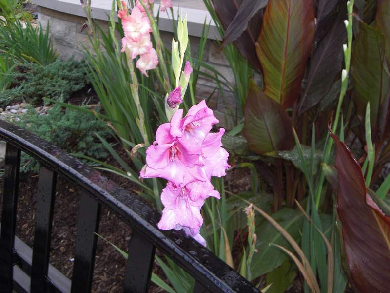 09/08 - Bloomington hospital main front porch flower gardens