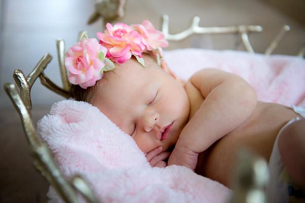 Rylan Newborn Photos