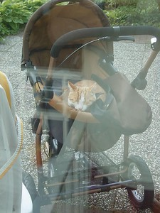 I think somebody's jealous... yes, they are! :) hihi Lex sleeping in the stroller.