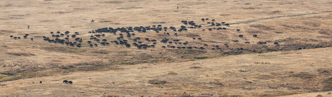 Moving the complete herd through the basin