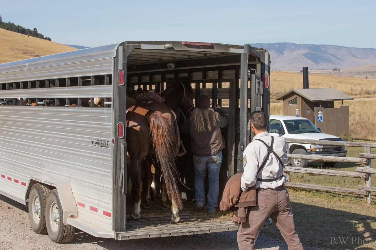 Amy and Francis loading the horses