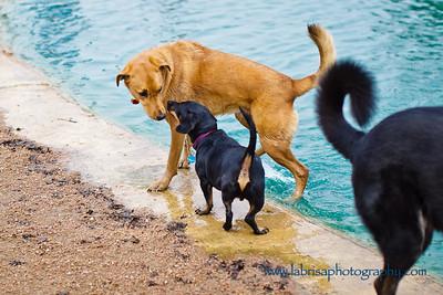 Doggies-01