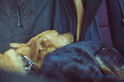 Doggies-12