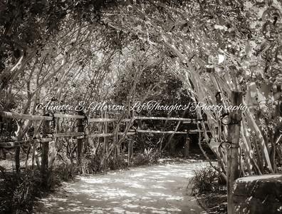 """Morikami Trail"" Delray Beach FL"