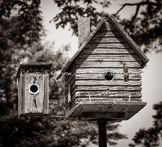 """""""Birdhouses"""" Sandy Cove, North East MD"""