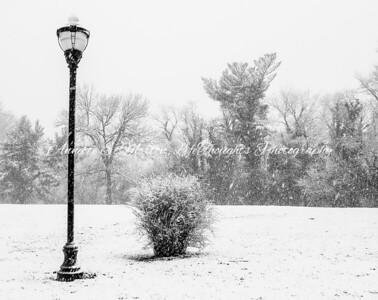 """Snowy Bello"" Lake Montebello, Baltimore MD"