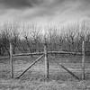 #blackwhite #BW #trees #SouthCarolina #Winter