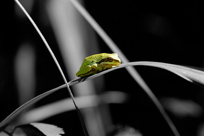 Out on a Leaf
