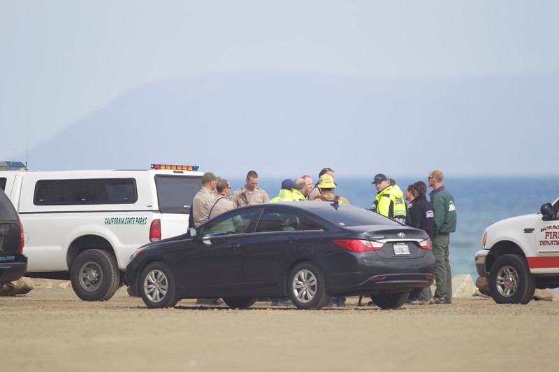 "Thursday May 9th Black Bear found at Morro Rock, in Morro Bay, California. The animal was tranquilized after a 3 hour search (it was hiding in a bush). All Photos by Mike Jones /  <a href=""http://www.Azhiaziam.com"">http://www.Azhiaziam.com</a>"