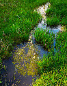Reflection, Dry Creek, near Dugas Rd