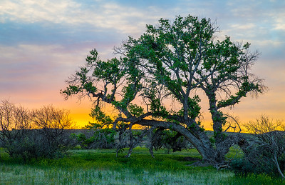 Sunrise and Cottonwoods, lush fields between Dry Creek and Ash Creek, about 3/4 mile east of i-17, south of Dugas Rd