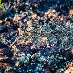 Black Rock with Lichen