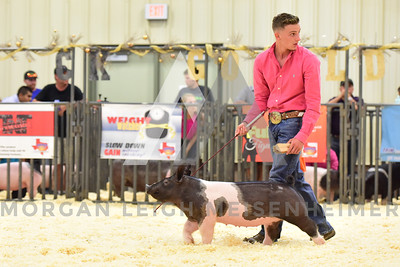 BlackGold_Showmanship_Senior_0028