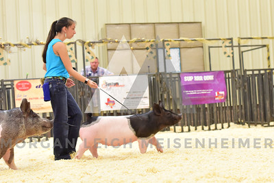 BlackGold_Showmanship_Senior_0003