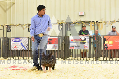 BlackGold_Showmanship_Senior_0022