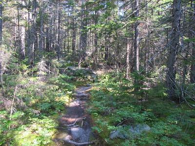 Algonquin Trail Plateau; before Black Mountain Ascent