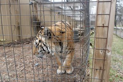 2017-01-14 New Tigers