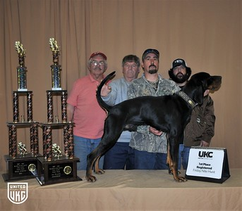 2017 American Black & Tan Days Friday 1st Place Registered