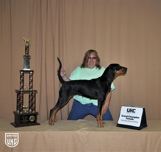 2017 American Black & Tan Days Saturday Grand Champion Female