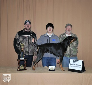 2017 American Black & Tan Days Overall Youth Bench Show Winner