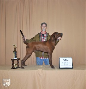 2017 American Black & Tan Days Saturday Best Redbone Male of Breed