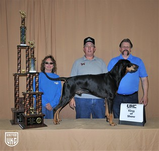 2017 American Black & Tan Days Saturday King of Show