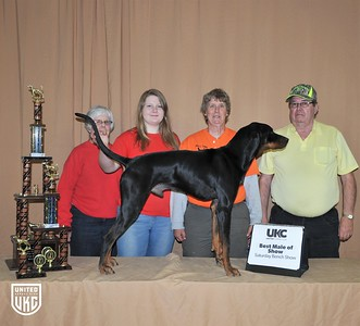 2017 American Black & Tan Days Saturday Best Male of Show