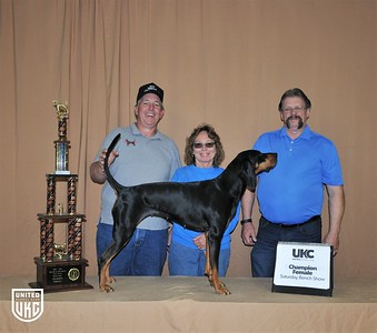 2017 American Black & Tan Days Saturday Champion Female