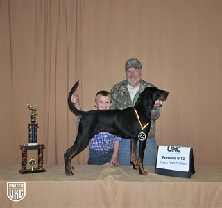 2017 American Black & Tan Days Youth Bench Show 8-12 Female