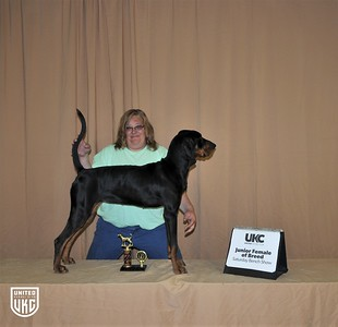 2017 American Black & Tan Days Saturday Junior Female